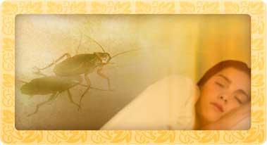 soñar con cucarachas -sueño cucaracha