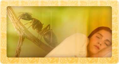 soñar con hormigas - sueño hormigas