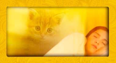 soñar con gatos - significado de los sueños