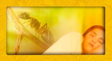 soñar con hormigas - significado de los sueños