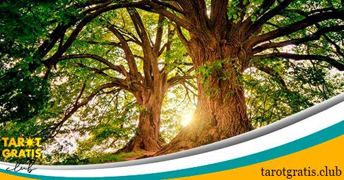 horóscopo celta de los árboles - tarot gratis club