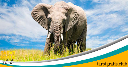 soñar con elefantes - significado de los sueños