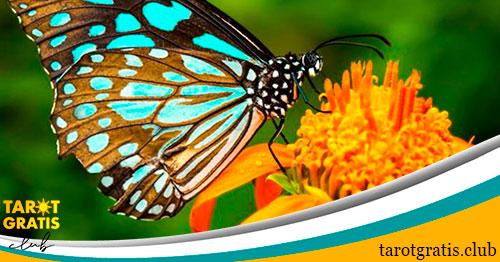 soñar con mariposas - significado de los sueños