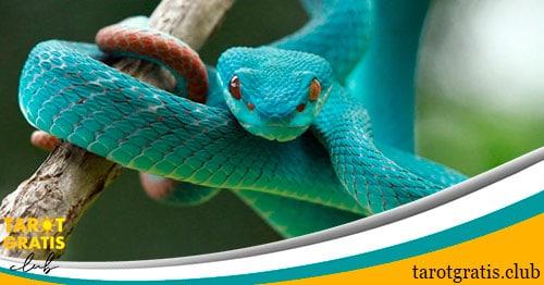 sueño-serpiente - soñar con serpientes