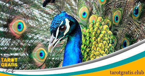 horóscopo maya del pavo real - tarot gratis club