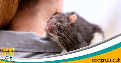 significado de soñar con ratas - tarot gratis club