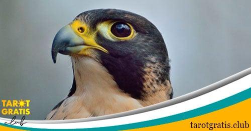 signo del halcón en el horóscopo maya - tarot gratis club