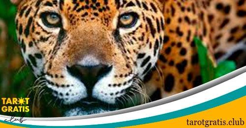 signo del jaguar en el horóscopo maya - tarot gratis club