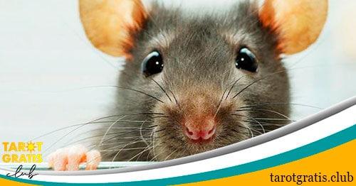 soñar con ratas - tarot gratis club